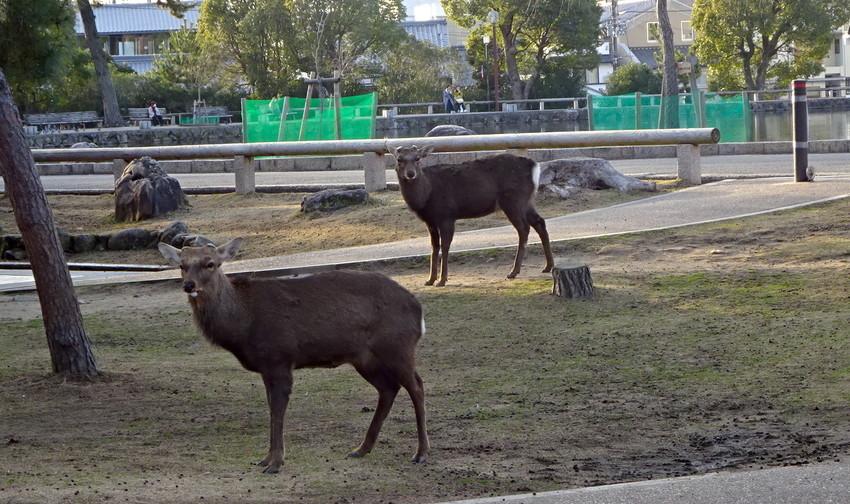f:id:shioshiohida:20210125161717j:plain