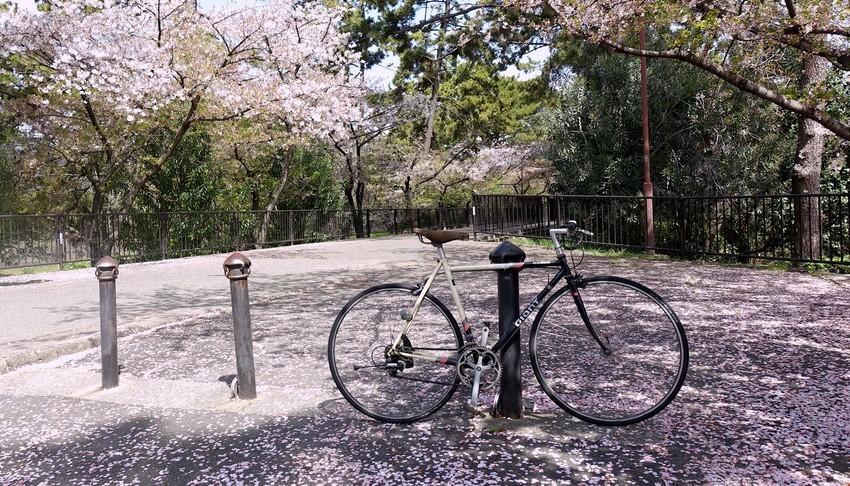 f:id:shioshiohida:20210405112721j:plain