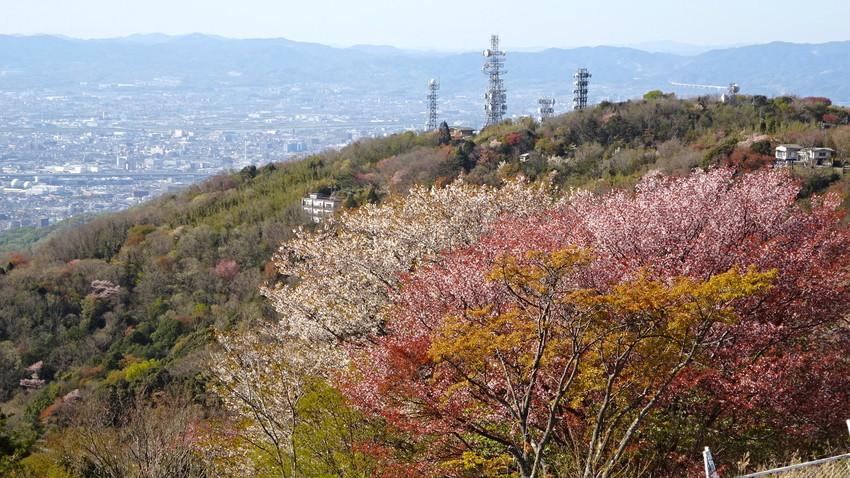 f:id:shioshiohida:20210410154805j:plain