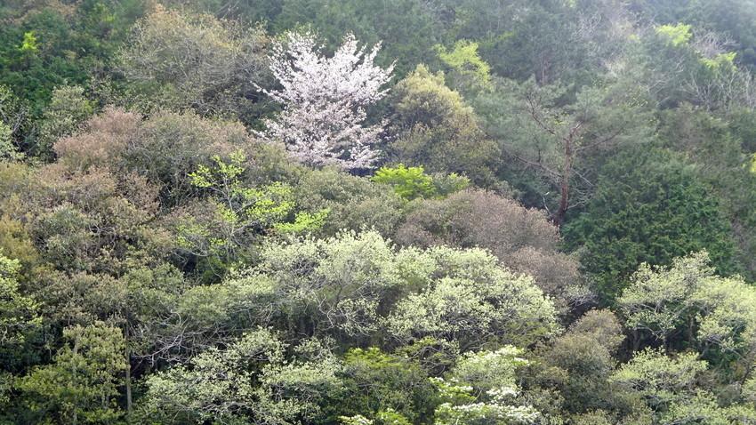 f:id:shioshiohida:20210415163309j:plain