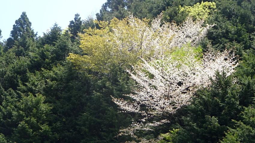 f:id:shioshiohida:20210427110147j:plain