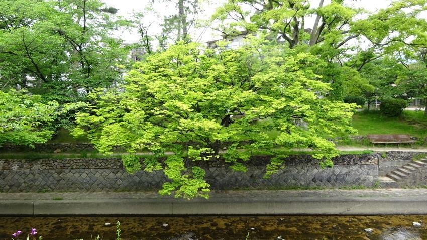 f:id:shioshiohida:20210512115055j:plain