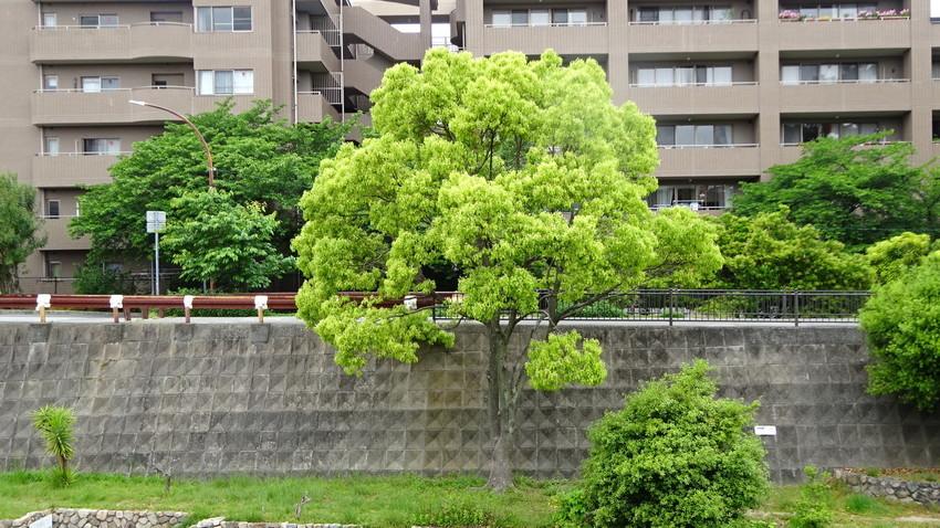 f:id:shioshiohida:20210512115345j:plain