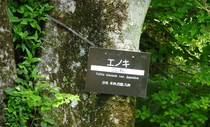f:id:shioshiohida:20210528121112j:plain