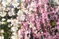 京都新聞写真コンテスト 「城南宮、春のカーテン」