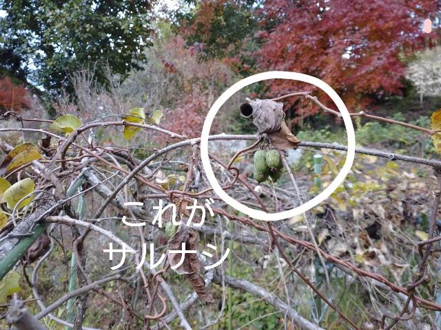 f:id:shiotaman:20201228170756j:image