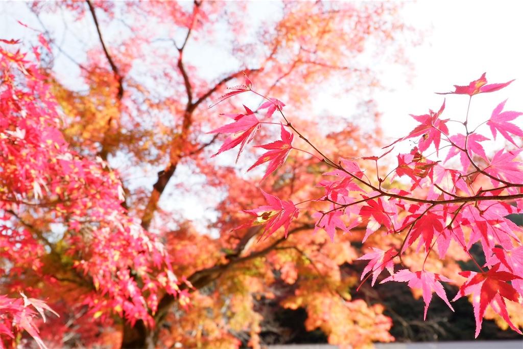 f:id:shioyan3:20161122003414j:image