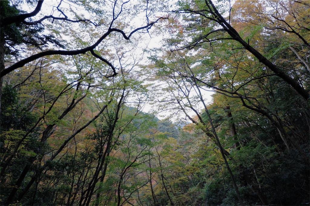 f:id:shioyan3:20161122010529j:image