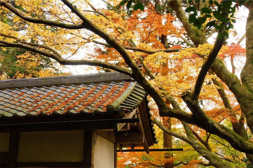 f:id:shioyan3:20161201211910j:image
