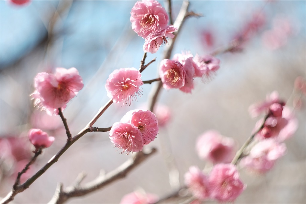 f:id:shioyan3:20170227001647j:image