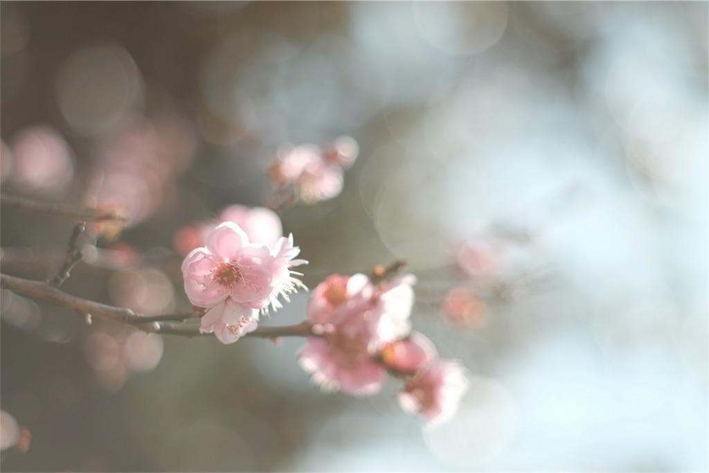 f:id:shioyan3:20170306100747j:image