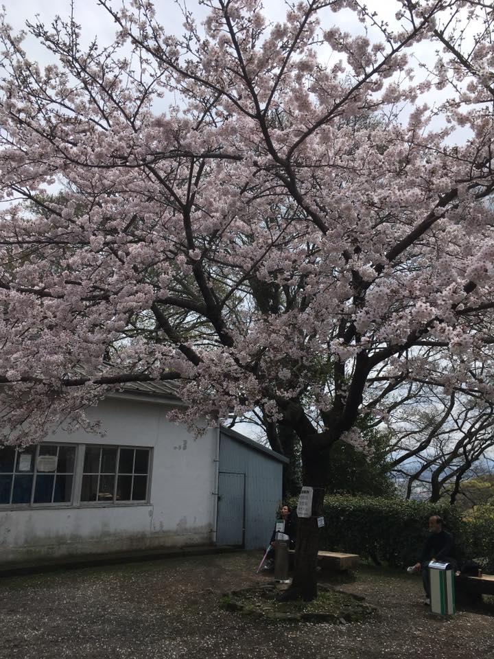 f:id:shirahamaokoshi:20170410092134j:plain