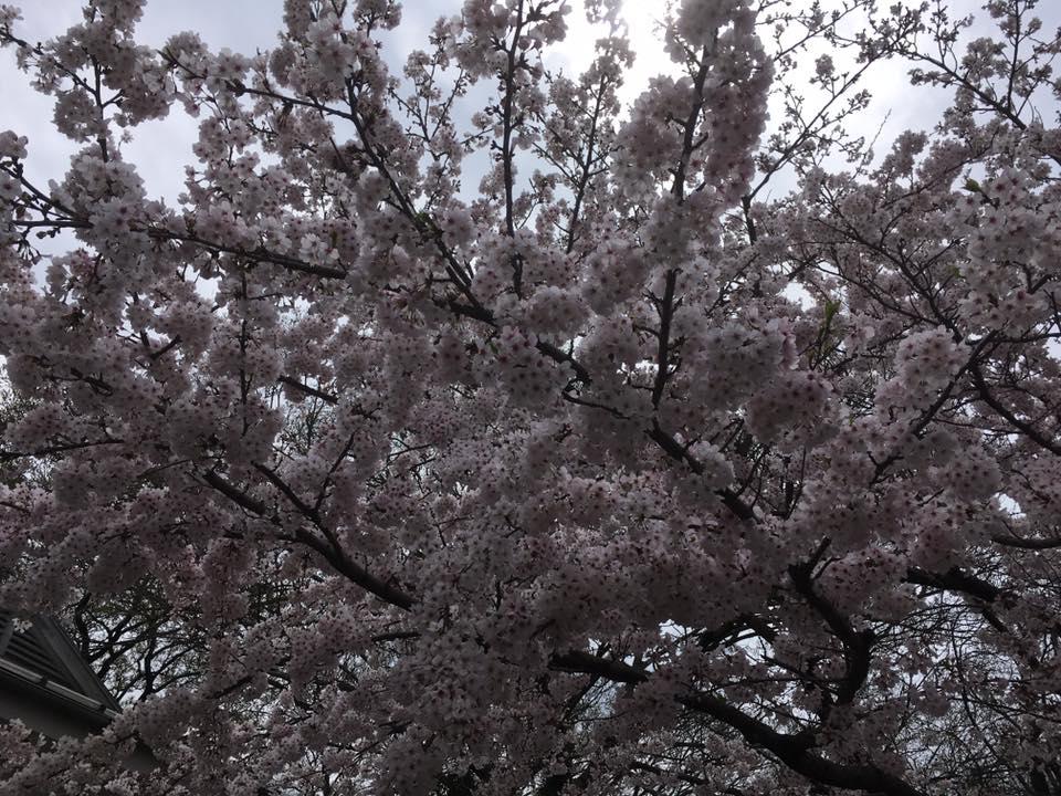 f:id:shirahamaokoshi:20170410092137j:plain