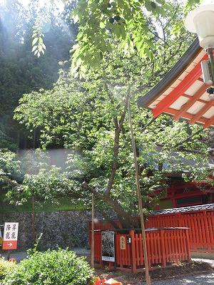 f:id:shirahashi0531:20180705232646j:plain
