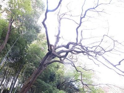 f:id:shirahashi0531:20181112180826j:plain
