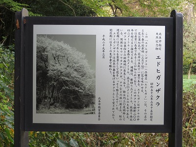 f:id:shirahashi0531:20181112180841j:plain