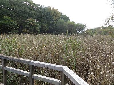 f:id:shirahashi0531:20181112180914j:plain