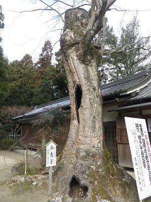 f:id:shirahashi0531:20190412153335j:plain