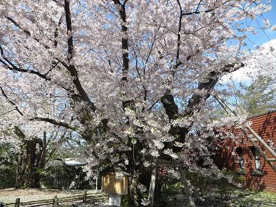 f:id:shirahashi0531:20191124175810j:plain