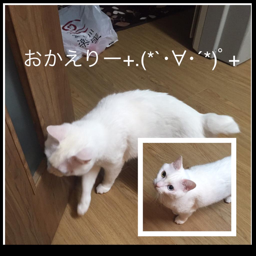 f:id:shirasumorimori:20170508230806p:plain