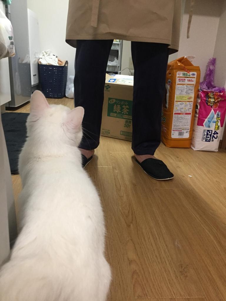 f:id:shirasumorimori:20170512225701j:plain