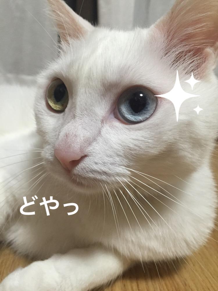 f:id:shirasumorimori:20170525210400j:plain