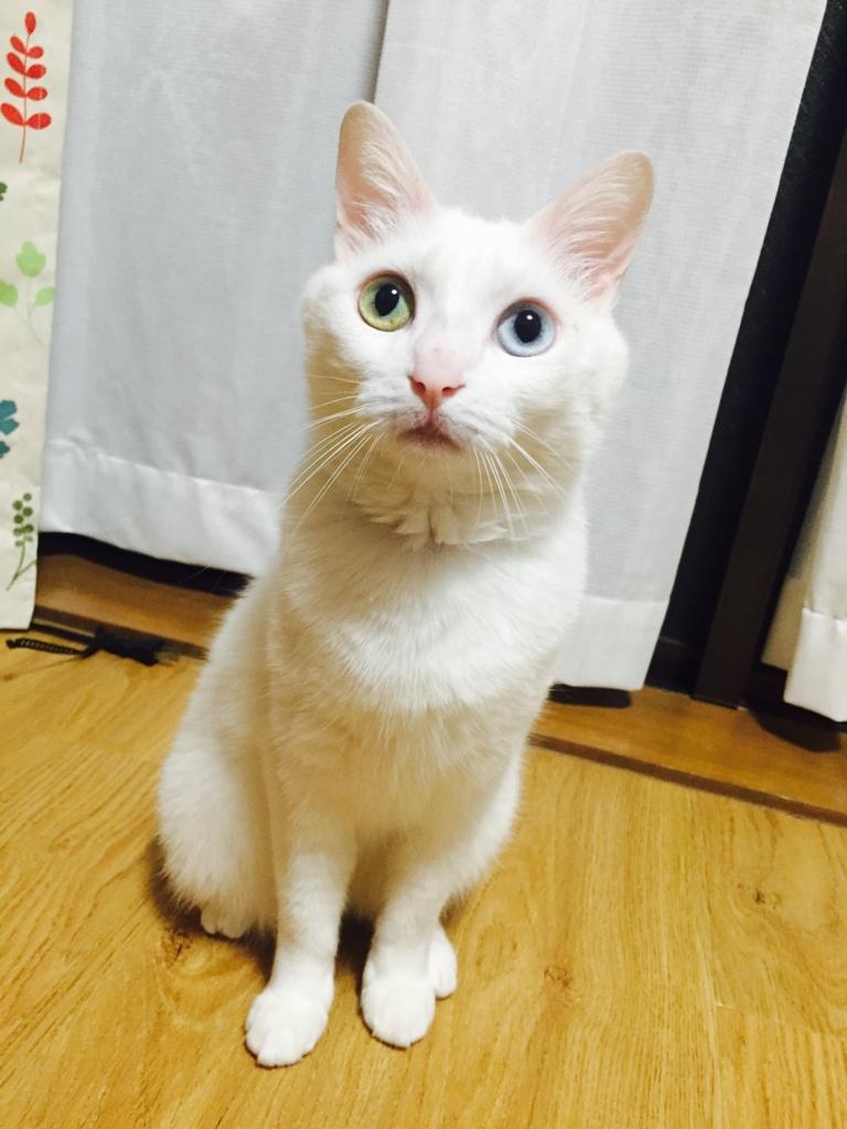 f:id:shirasumorimori:20170526230458j:plain