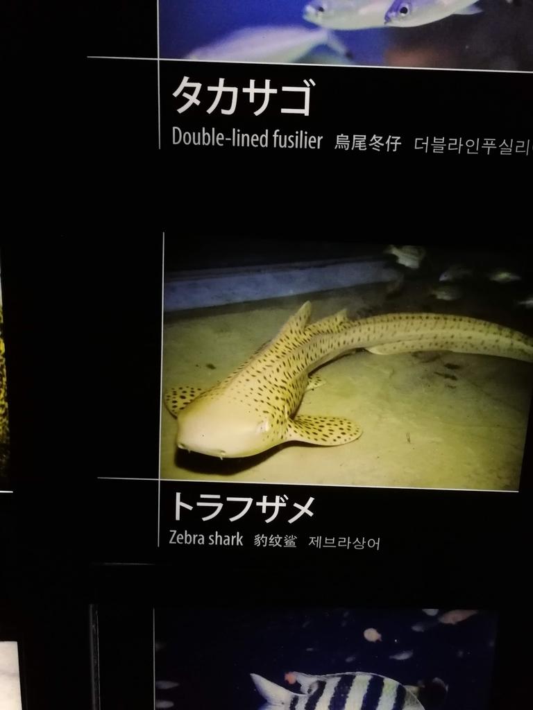 f:id:shiratama-anko:20181216122706j:plain