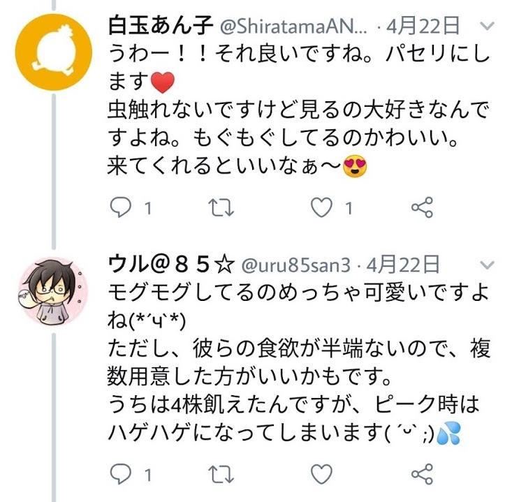 f:id:shiratama-anko:20190522233519j:plain