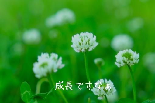 f:id:shiratama-anko:20190524224957j:plain