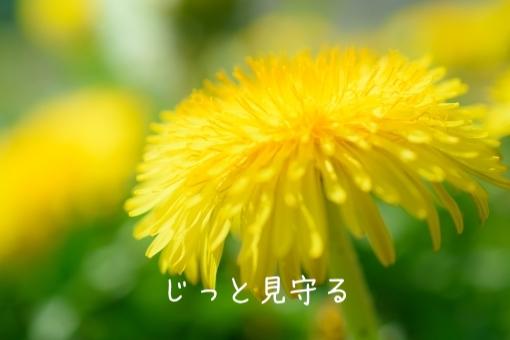 f:id:shiratama-anko:20190524225902j:plain