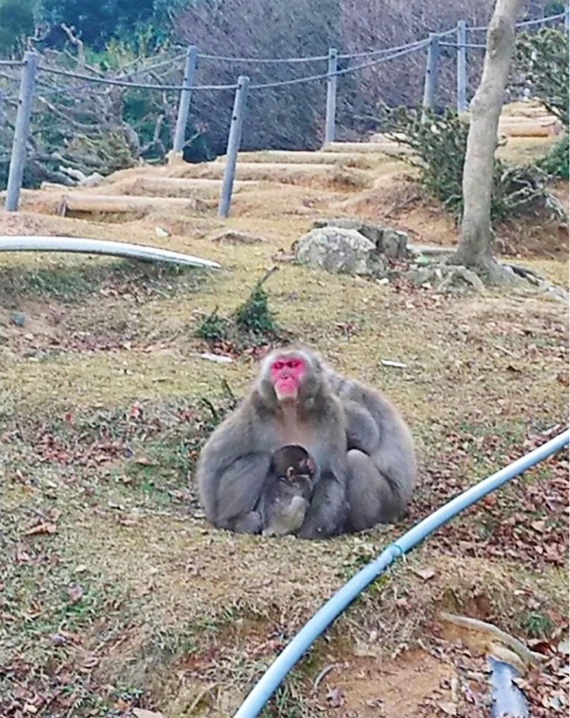 f:id:shiratori_ke:20191121204019j:image
