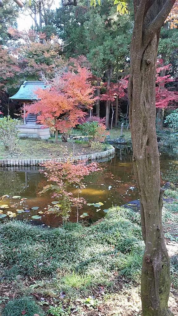f:id:shiratorimatsumoto:20181201204619j:image