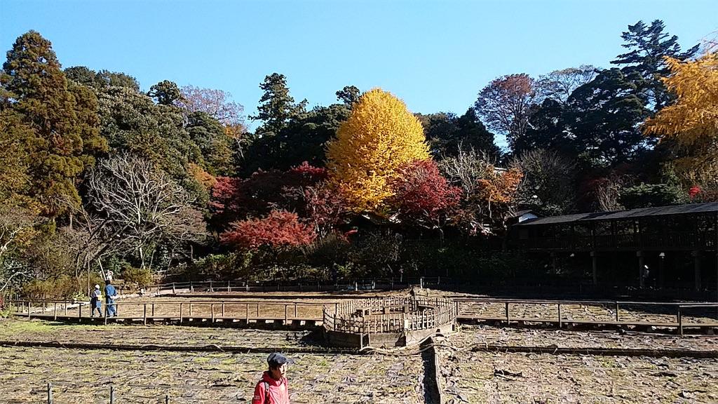 f:id:shiratorimatsumoto:20181201204737j:image