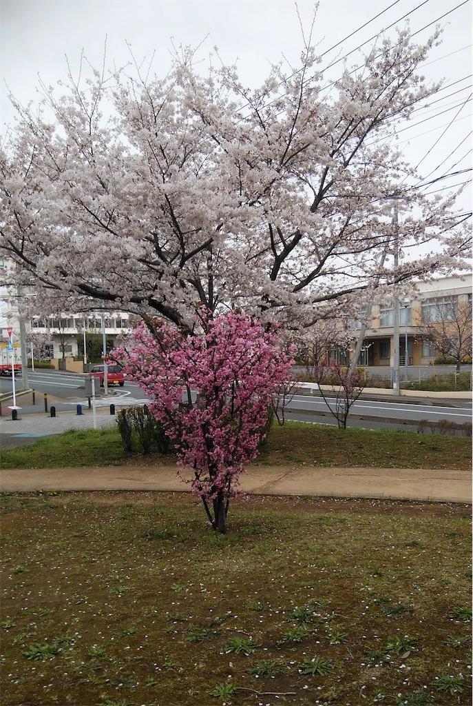 f:id:shiratorimatsumoto:20210325173225j:image