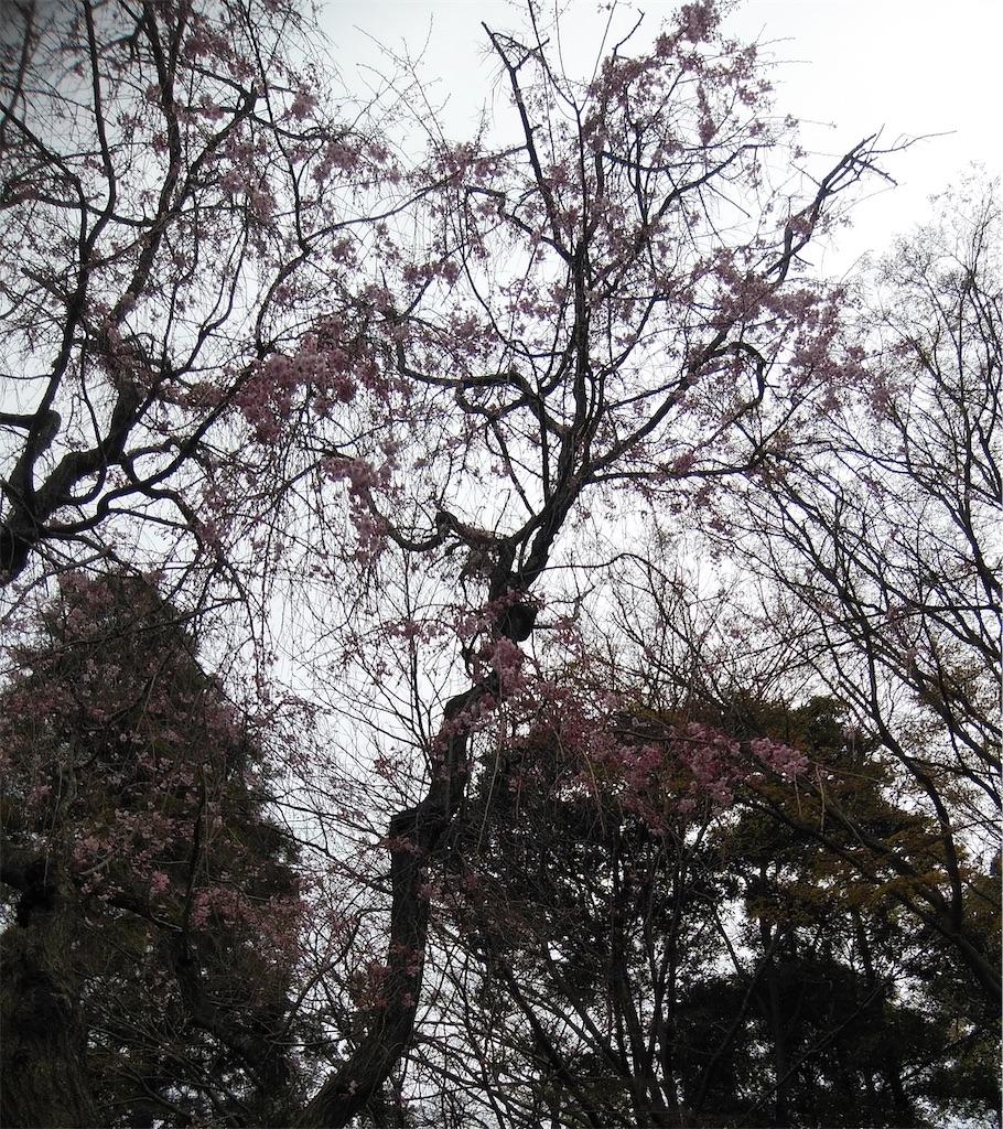 f:id:shiratorimatsumoto:20210325174148j:image