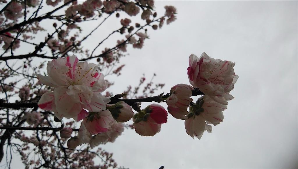 f:id:shiratorimatsumoto:20210325175852j:image