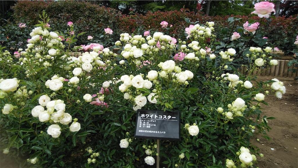 f:id:shiratorimatsumoto:20210513111011j:image