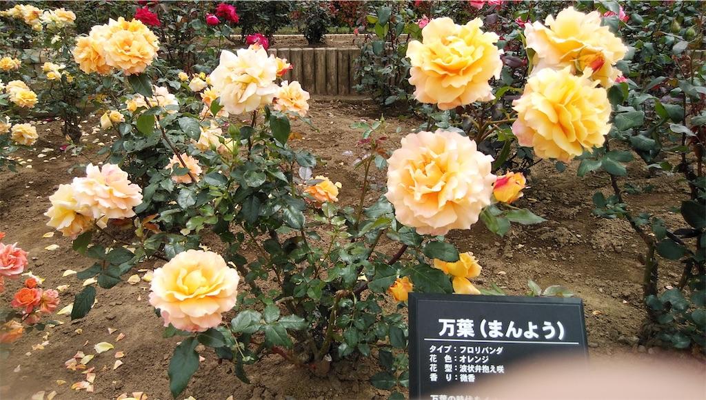 f:id:shiratorimatsumoto:20210513111220j:image