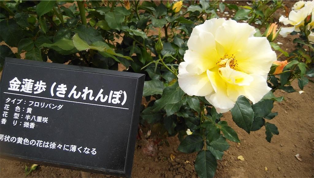 f:id:shiratorimatsumoto:20210513111248j:image