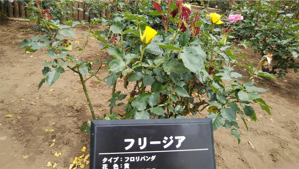 f:id:shiratorimatsumoto:20210513111322j:image