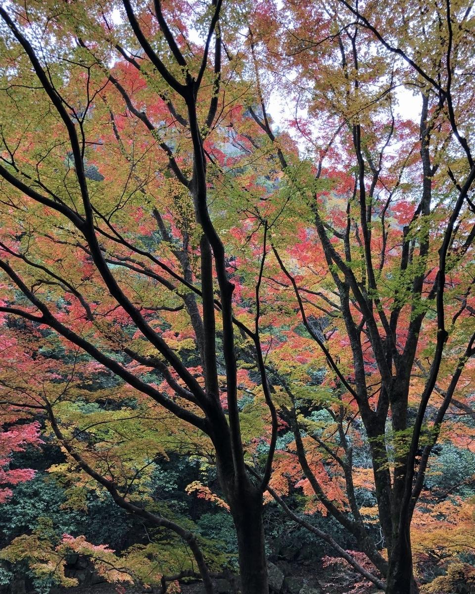 f:id:shiratsume:20191125200723j:plain