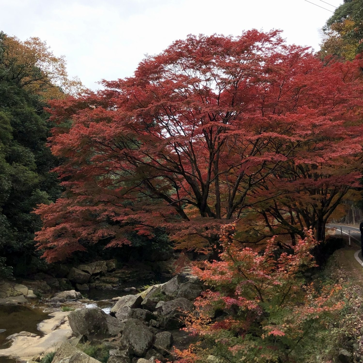 f:id:shiratsume:20191125200817j:plain