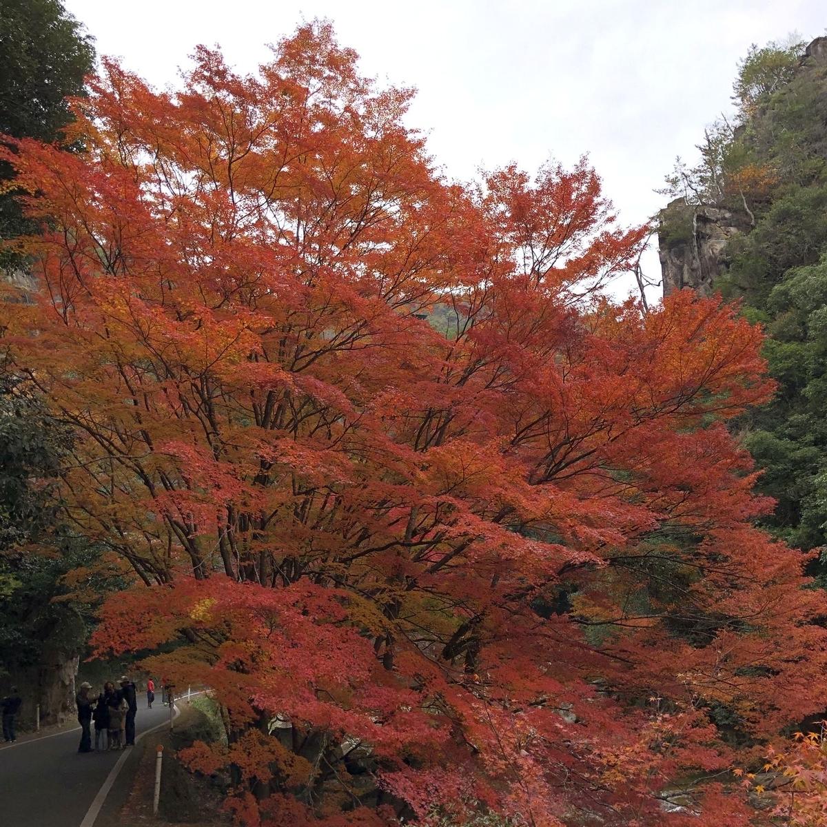 f:id:shiratsume:20191125201006j:plain