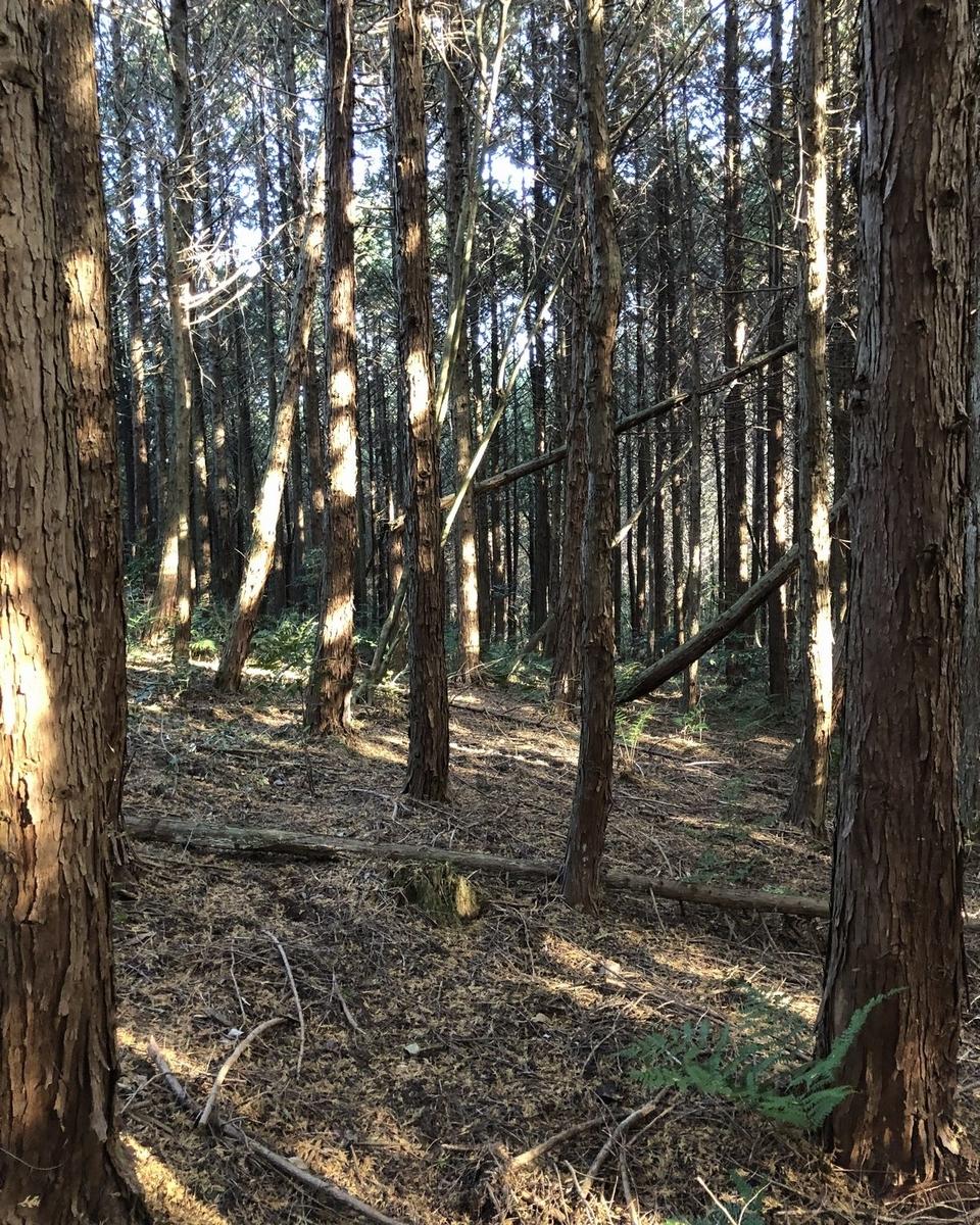 f:id:shiratsume:20191216115952j:plain
