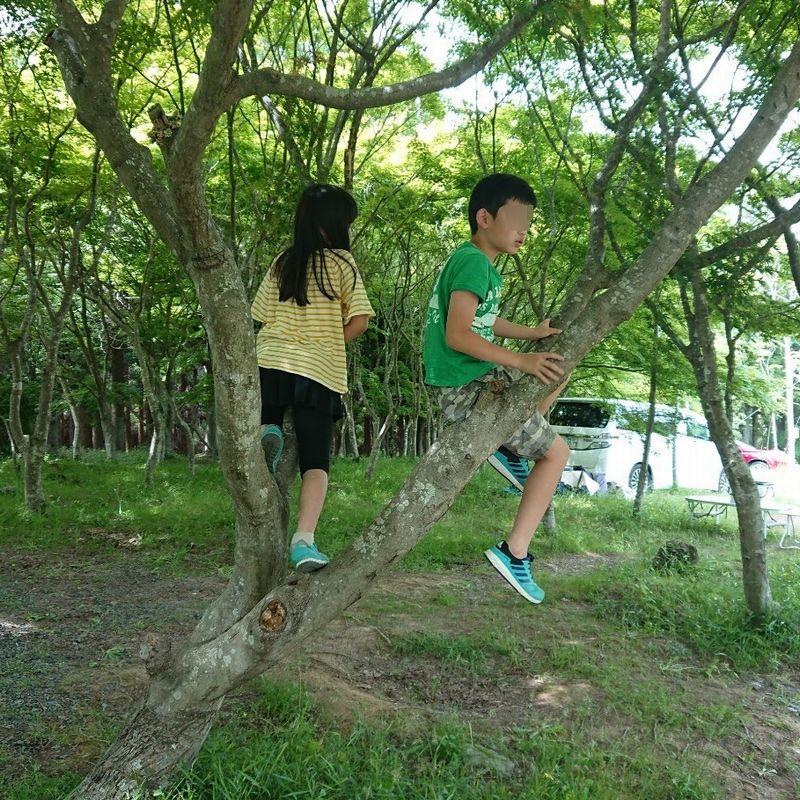 f:id:shiratsume:20200605224004j:plain