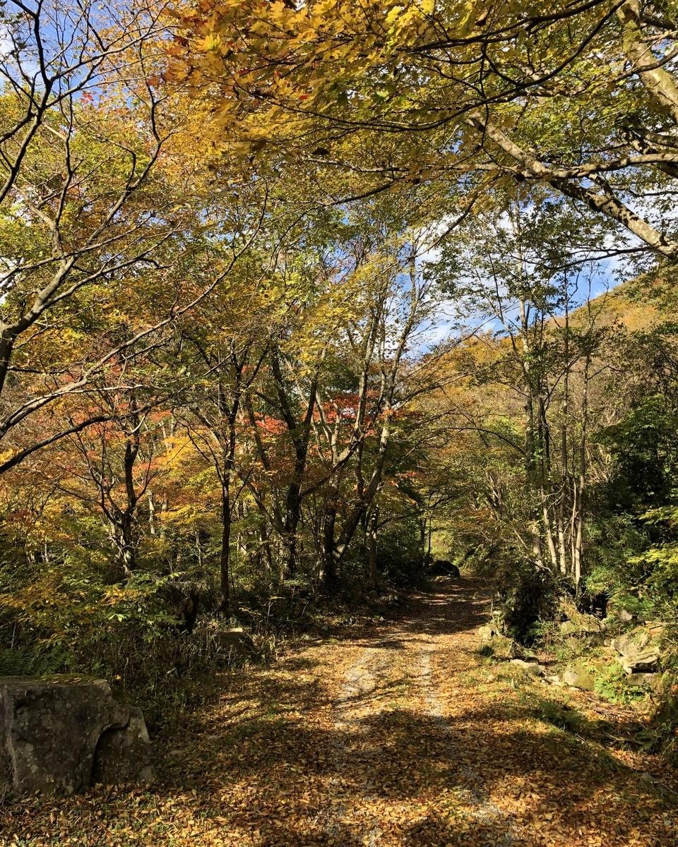 f:id:shiratsume:20201104211721j:plain