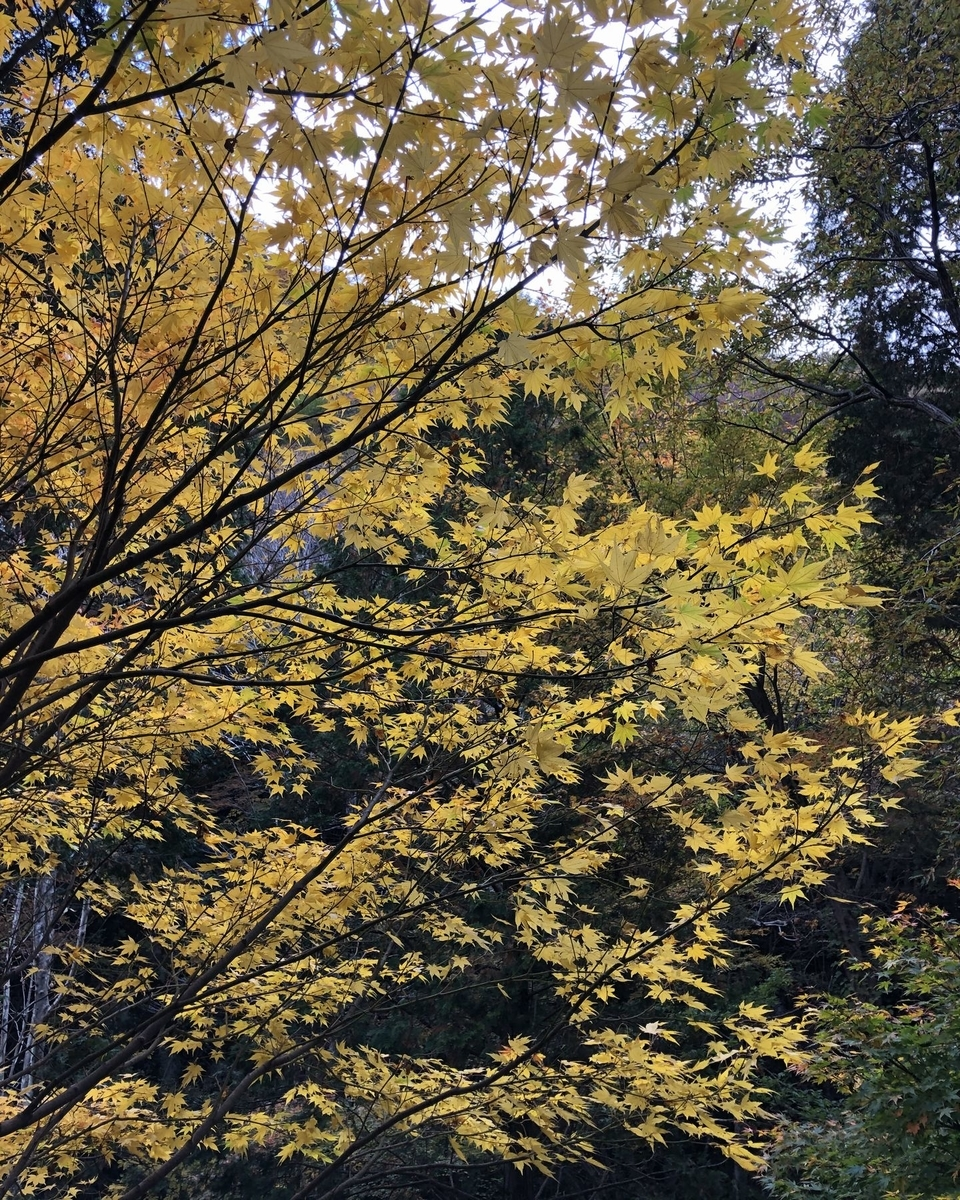 f:id:shiratsume:20201104212216j:plain