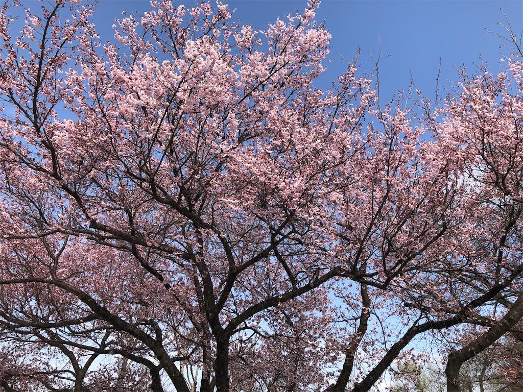 f:id:shiratuki:20210404203537j:image