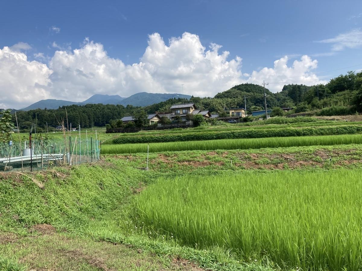 f:id:shirayuri_kango:20210724161953j:plain